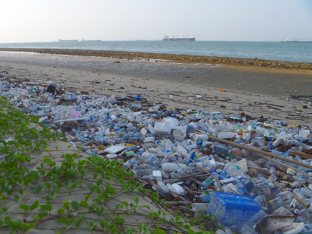 Oil-slicked Tanah Merah: Litter is a problem too!
