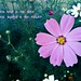 happines held id the seed happines shares is the flower by haliuk.g