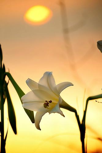 sunset taiwan 日落 wildlily sigma70300mm 野百合 台中市 taichungcity 大肚山 dadumountain sonya850