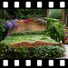Flower Bed FILM_STRIP