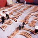 Shanghai customs inspect over 3 tonnes of African ivory seized in August, 2002, in a shipment of timber from Kenya. Credit: Shanghai Customs