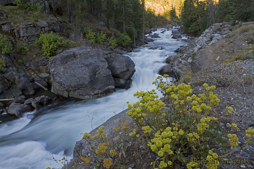flowers summer nature wet water yellow creek canon outdoors washington scenic cascades icicle leavenworth