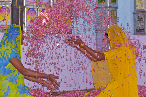 Playing with the Rose Petals, India