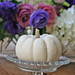 tiny white pumpkin by suzanneduda