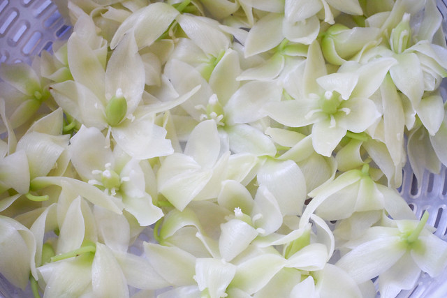 Yucca Blossoms Blanched