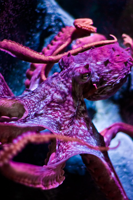 Giant Octopus | Flickr - Photo Sharing!