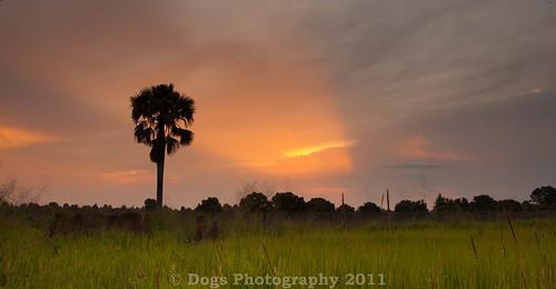 sunset tree green sudan canon2470mm28 canoneos1dsmarkiii
