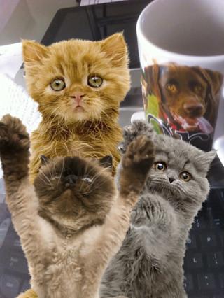 Cat Lovers Camera by TRKennedy3