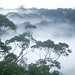 A dawn mist rises over the Amazon