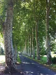 3107 St Pantaly d'Ans - Photo of Montagnac-d'Auberoche