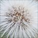 Seeds by *ian*