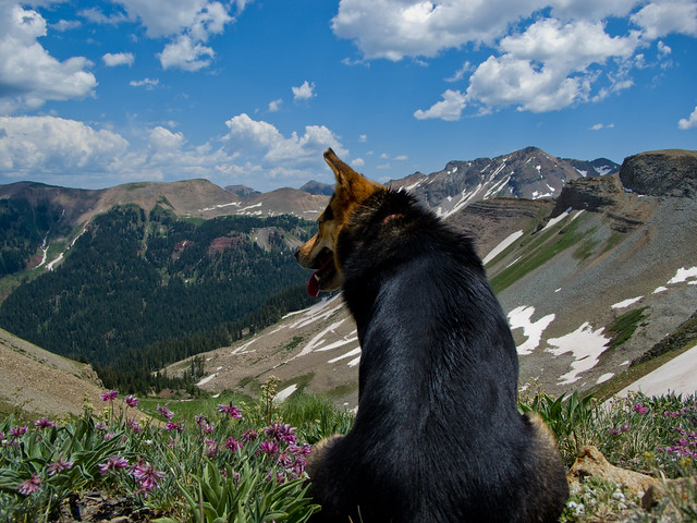 A Dog Resting Atop Sharkstooth