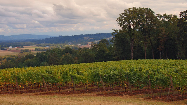 Yamhill County Vineyards by Patrick Morgan