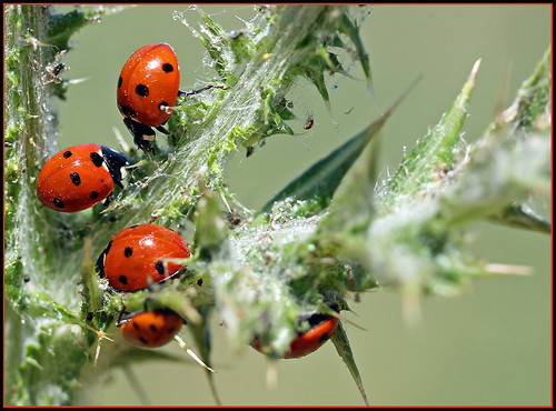 """The Family That Eats Together, Stays Together"" - Lady Bug Family"