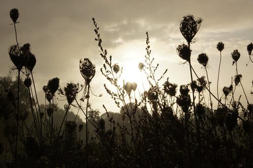 morning plants sun backlight sunrise meadow sony1680cz sonyalpha55