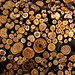 Small photo of Wood Pile