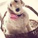 cute dog in a basket