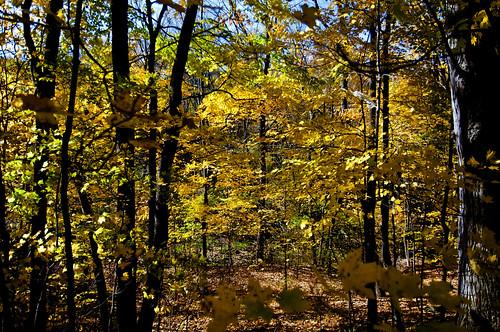 fall colors woods oct millcreekpark nikond90 nikon1224mmlens