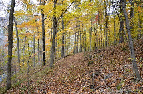 autumn fall leaves yellow creek stream hiking fallcolors