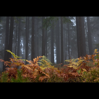Autumn fern...