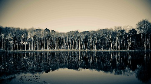 trees panorama lake landscape