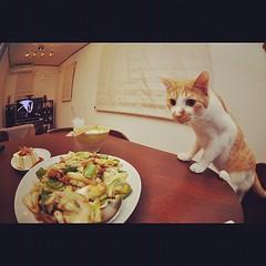 回鍋肉とこてつ #cat