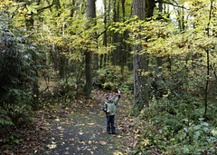 autumn foliage leaf walk in tryon creek state park  …