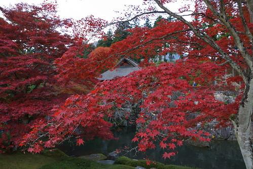 古峰園の紅葉