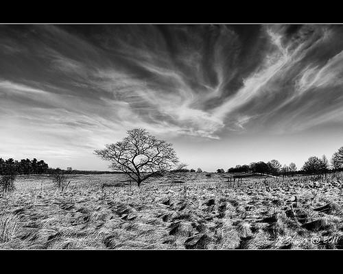landscape valleyforge treeblackwhite