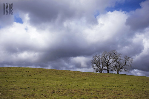 trees field grass clouds oregon landscape ian photography three boulevard south images wee salem minimalism minimalist blvd sane kuebler