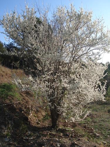 Ja es primavera