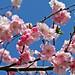 Spring is in the air.......................................................Explore by betuwefotograaf
