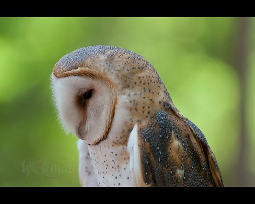 bird barn nc alba charlotte northcarolina raptor owl crc huntersville tyto carolinaraptorcenter nikonafsteleconvertertc17eii nikonafsnikkor70200mmf28gedvr