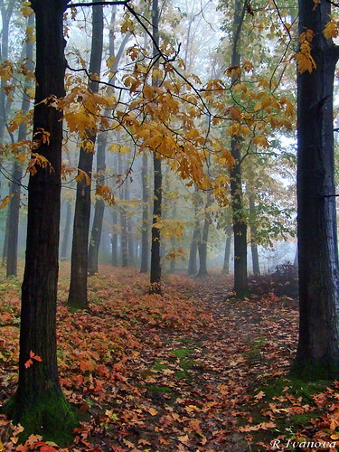 fall nature forest landscape sony bulgaria природа gabrovo българия габрово blinkagain bestofblinkwinners rivanova риванова