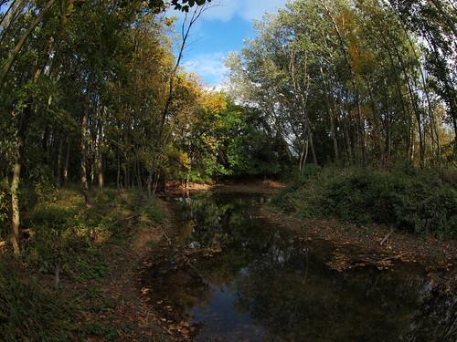 Lobau Hausgraben alluvial forest (48°10' N 16°31' E)