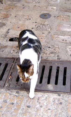 Kissa Krk:issä by Anna Amnell