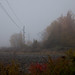 Misty morning #01