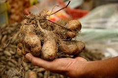 root, vegetable, produce, food, close-up, root vegetable, tuber,