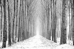 Il cammino silenzioso della neve