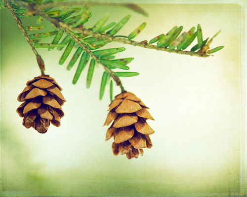 The Fresh Scent of Pine