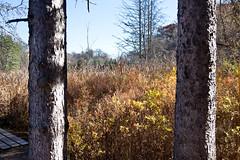 Five Rivers - Delmar, NY - 2010, Nov - 05.jpg by sebastien.barre