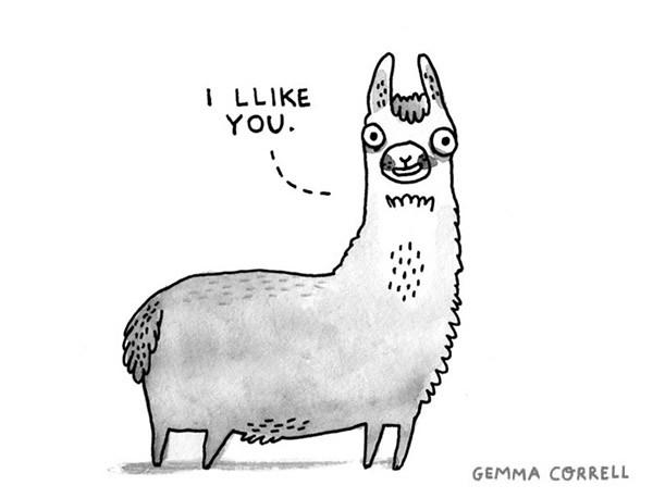 llama   Flickr - Photo Sharing!