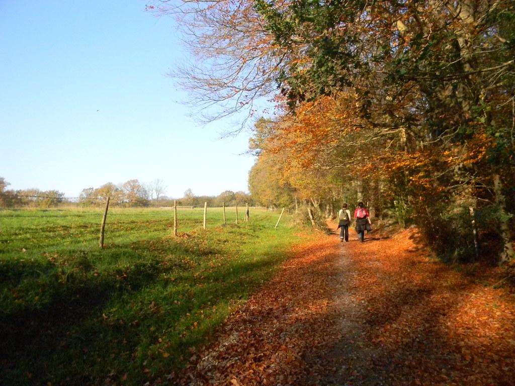 Autumnal scene Buxted Circular