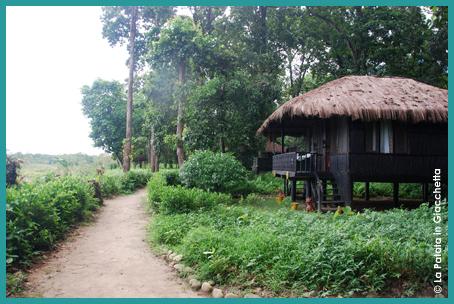 Chitwan-8