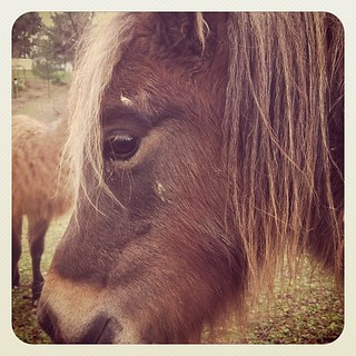Cousin, mini horse. #farm #pa