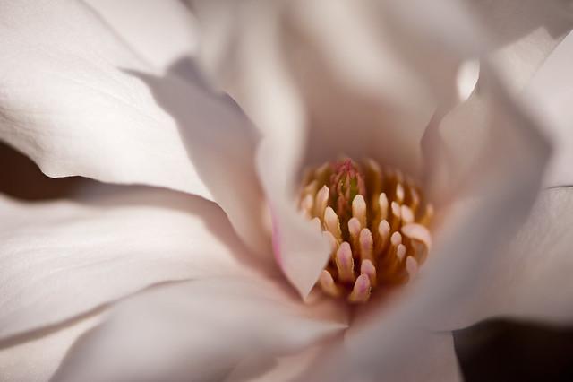 020 flower