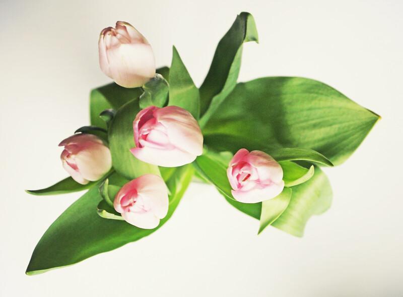 Tulpes876