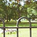 HFF - Park Fence