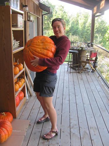 56 pound Cinderella Pumpkin, Rouge Vif d'Etampes