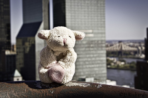nyc rooftop photography october sheep pentax manhattan fridgemagnet k5 2011 bahbahra singingwithlight 2011k5nycoctobersingingwithlightbbahbahrafridgemagnetmanhattanpentaxphotographyrooftopsheep